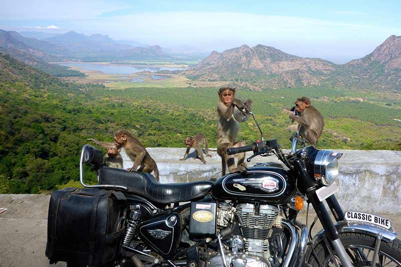 Mysore to Masenagudi road